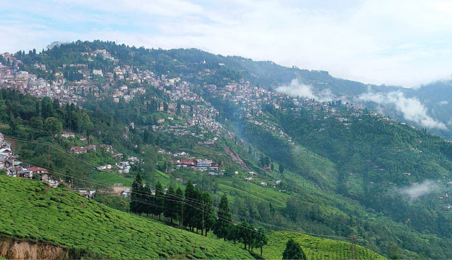View of Darjeeling from the Happy Valley Tea Estate
